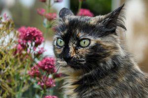 rośliny doniczkowe trujące dla zwierząt domowych