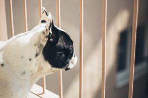 bezpieczeństwo zwierząt na balkonie