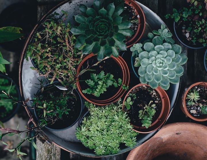Rośliny doniczkowe do każdego domu